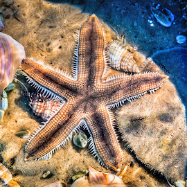 Togetherness by DB Channer - Animals Sea Creatures