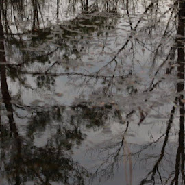 Reflections  by Terry Linton - Nature Up Close Water