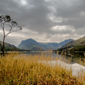 The Lone Tree by Andy Young - Landscapes Mountains & Hills ( england, uk, autumn, trees, reflections, buttermere lake, lake district )