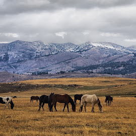 Herd by Dave Bower - Landscapes Mountains & Hills