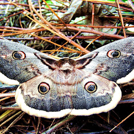 by Bogdan Ene - Novices Only Wildlife (  )