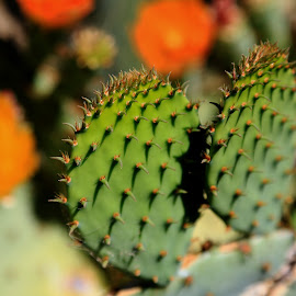 New Mexico in Bloom by Don Bates - Nature Up Close Other plants ( desert, blooms, sunny, new mexico, cactus )