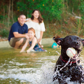Family Portraits with Beau by Amber Kay - Animals - Dogs Playing ( pet portraits, mans best friend, family dog, ., at the lake, playing fetch, at the bay )
