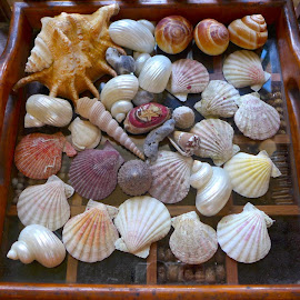 she collects dead seashells fr the seashore by Liza Del Rosario - Novices Only Objects & Still Life ( liza, galera, anilao, batangas;maricaban,  )