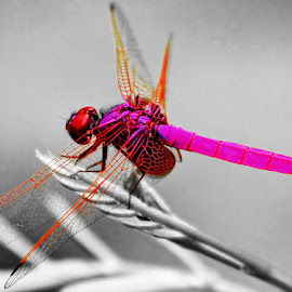 by Luci Petro - Novices Only Macro