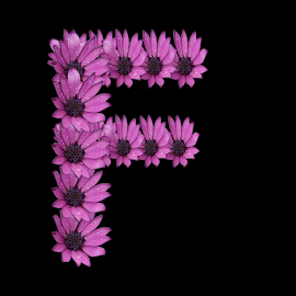 Alphabet - F by Dipali S - Typography Single Letters ( optical, optics, illustration, motivation, daisy, type, decor, inspiration, nature, calligraphy, card, place, flower, template, element, text, creative, letter, font, art, label, calligraphic, sign, frame, poster, word, typography, letters, headline, graphic, ornate, decorative, dew, captioned, title, words, quote, inscription, rain, classic, note, banner, typographic, abstract, icon, purple, vintage, decoration, advertisement, photo, message, motivational, typo, background, artistic, drops, design )