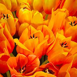 Tulips by Joseph Vittek - Digital Art Things ( red, tulip, yellow )