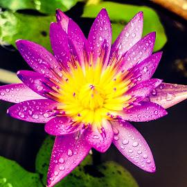by Rudesphere Corminal - Flowers Single Flower