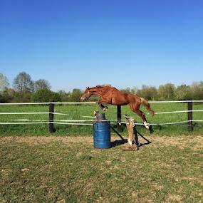 by Ivana Tilosanec - Animals Horses ( horse, jump,  )