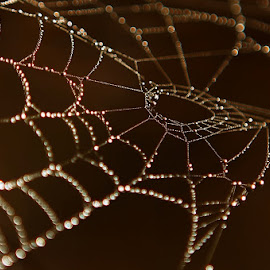 * * *  by Katka Kozáková - Nature Up Close Webs ( autumn, drops, shine, web, morning )