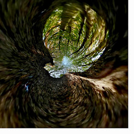 Virtual Racoon View of Trees by Gia Gee - Digital Art Things ( virtual tree view, virtual view, virtual racoon view, virtual tree canopy view, virtual landscape )