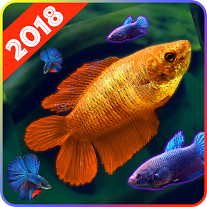 Download Betta Fish Wallpaper for Android