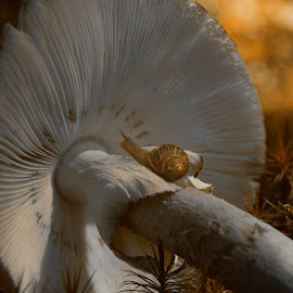 Always remember to fall asleep with a dream and wake up with a purpose by Susan Hartman - Nature Up Close Mushrooms & Fungi