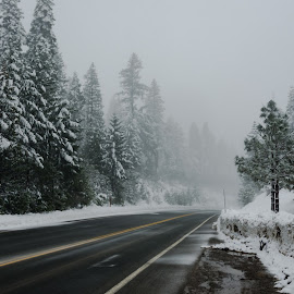 by John Rourke - Landscapes Weather ( 2018, ca, california, snow, trees )