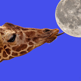 Lick The Moon by Will McNamee - Digital Art Animals ( dld3us@aol.com, gigart@aol.com, aundiram@msn.com, danielmcnamee@comcast.net, mcnamee2169@yahoo.com, ronmead179@comcast.net )