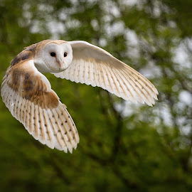 Oliver by Tom Whelton - Animals Birds