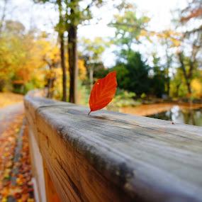 Leave in a city park by Luboš Zámiš - City,  Street & Park  City Parks