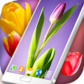 Tulips Live Wallpaper APK for Bluestacks