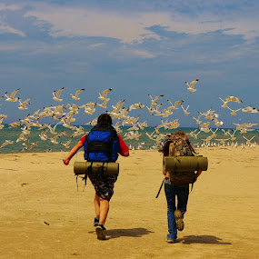 Hiking on the beach by Darrin Halstead - Landscapes Beaches ( sea, beach, landscape, birds, hiking,  )