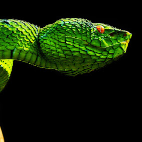 by Handri Fitrido - Animals Reptiles