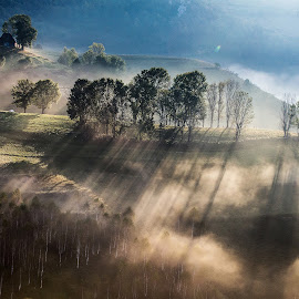 Bring me the light by Marius Turc - Landscapes Sunsets & Sunrises ( nature, fog, sunset, trees, morning, light, mist )