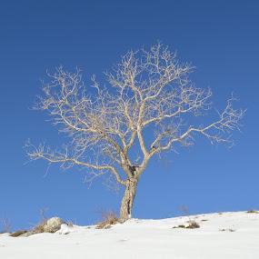 Winter tree by Olsi Belishta - Novices Only Landscapes