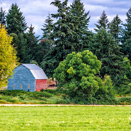 old red bard by Chris Bartell - Landscapes Prairies, Meadows & Fields ( oregon, barn, seed, landscape, silverton )
