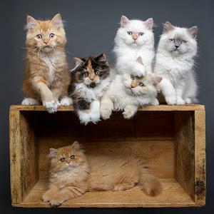 9Y8A8479 six kittens.jpg