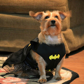 Annie the Bat Girl by Rhonda Kay - Animals - Dogs Portraits (  )