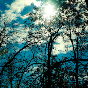 Fall Sun by Lacy Gillott - Nature Up Close Trees & Bushes ( sky, nature, tree, fall, lake, sun, stoco )