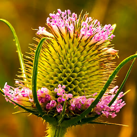 by Thomas Thain - Flowers Flowers in the Wild