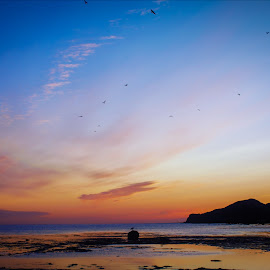 Early birds  by Ste D - Landscapes Beaches ( clouds, sun rise, sea, birds, rocks )