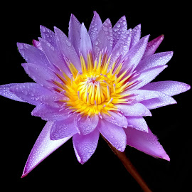 Waterlily  by Asif Bora - Instagram & Mobile Other