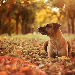 *** by Lukáš Lang - Animals - Dogs Portraits