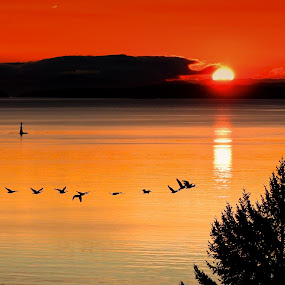 Salish Sea Sunrise by Campbell McCubbin - Landscapes Sunsets & Sunrises ( water, canada goose, silhouette, sunrise, geese, sun,  )
