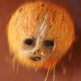 Coconut by Onkar Plaha - Food & Drink Ingredients ( coconut, digital art, beauty in mundane,  )