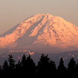 Going to Bed by Marilynn Court - Landscapes Mountains & Hills ( snow capped, mountain, peak, mount rainier, glaciers, cascades, northwest, shadows, washington, mt rainer, grand, sunset, snow, trees, tahoma, rainer )