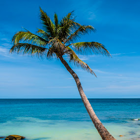 by Gato Perro Tronchatoro Krois - Landscapes Beaches ( palm, palm tree, palmera, playa, beach )