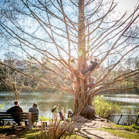 A Tree Full Of Friendship by Mauricio Alas - City,  Street & Park  City Parks