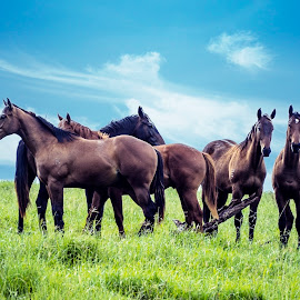 Friendly Gathering by Rob Crutcher  - Animals Horses ( animals, horses, herd, horse, landscape )