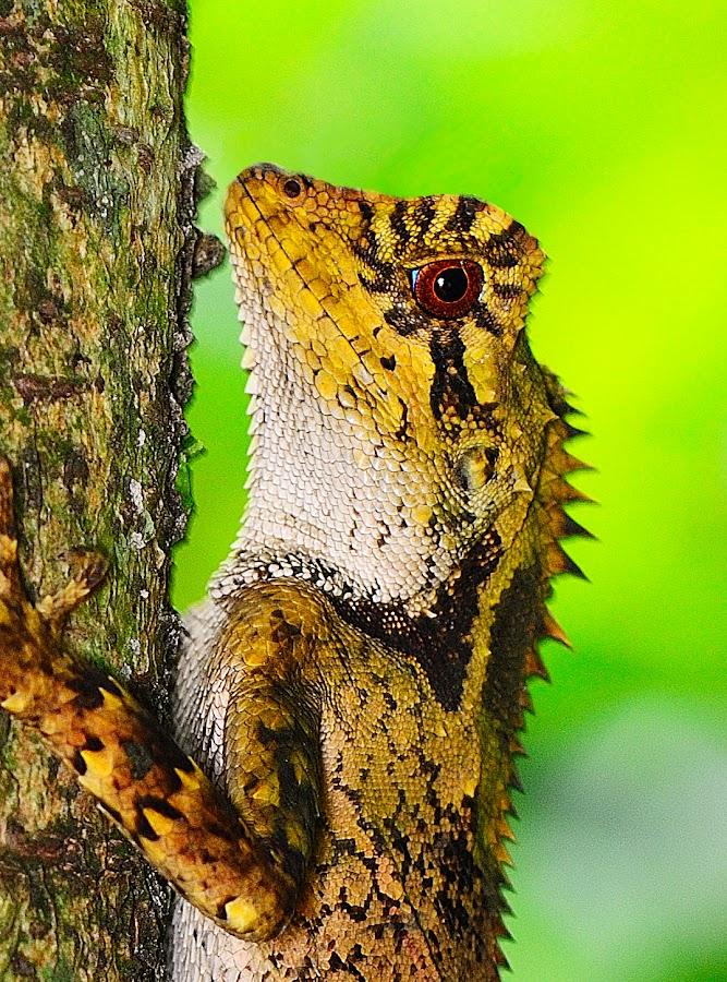 by Jeffry Sabara - Animals Reptiles