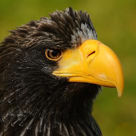 What a beak by Gérard CHATENET - Animals Birds