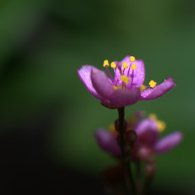 by Dadan Suryasaputra - Nature Up Close Flowers - 2011-2013