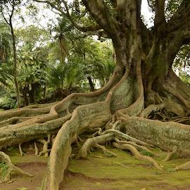 Mogočne by Bojan Kolman - Nature Up Close Trees & Bushes (  )