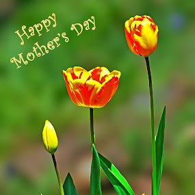 Happy Mom's Day by Naveen Naidu - Typography Captioned Photos