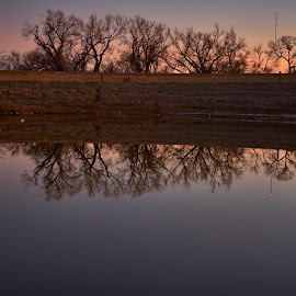 Sun Reflection  by Jeff Brown - Nature Up Close Water ( water, nature, refelction, trees )