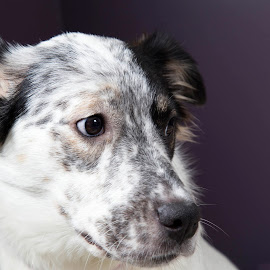 Pepper - A recent moma by Ginger Wlasuk - Animals - Dogs Portraits ( mama, shelter dog, sray, cattle dog, dog )