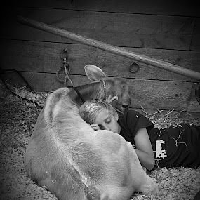 Just a boy and his calf... by Diane Beique-Jacques - Babies & Children Children Candids (  )