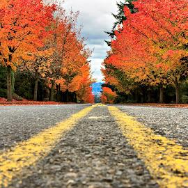 Fall Lowdown by David Hurt - City,  Street & Park  Neighborhoods ( orange, red, color, street, fall )