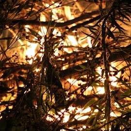 Fire in the brush by Jennifer Duffany - Abstract Fire & Fireworks ( fireinthebrush fire burning burningbrush inthegrass )
